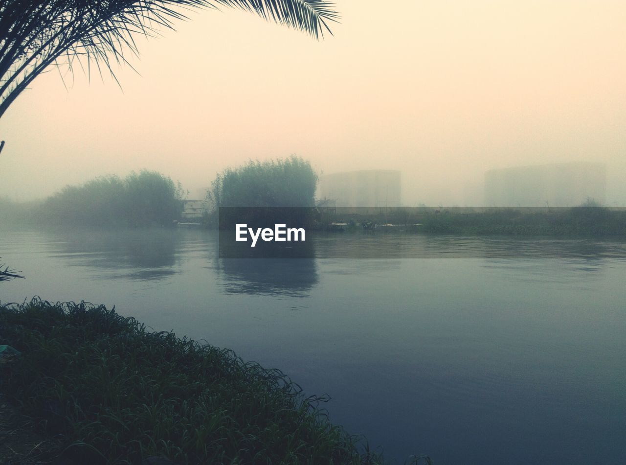 tree, nature, water, fog, beauty in nature, tranquil scene, reflection, scenics, tranquility, sunset, outdoors, no people, sky, mist, lake, hazy, palm tree, day