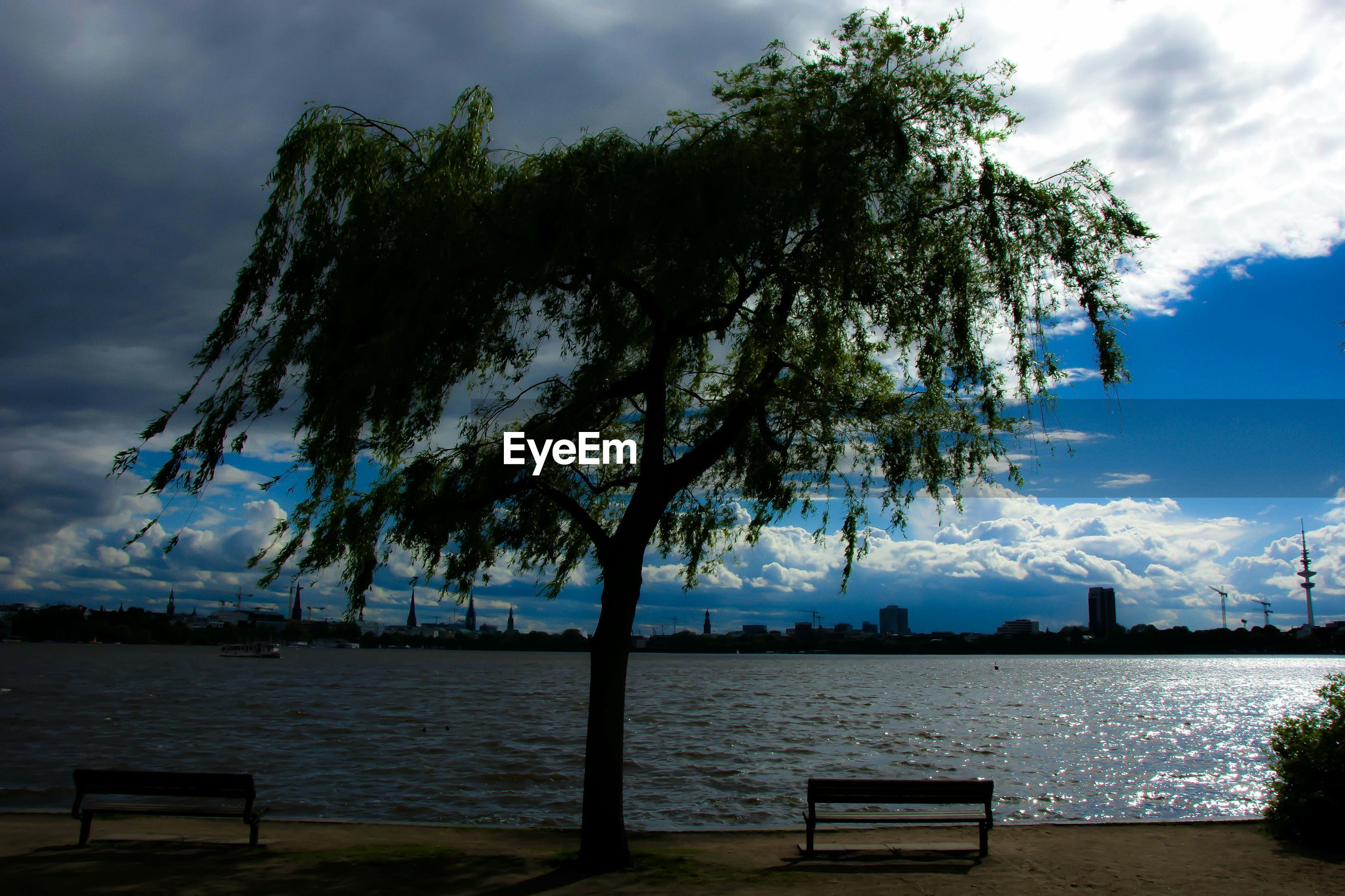 Tree on riverbank against cloudy sky