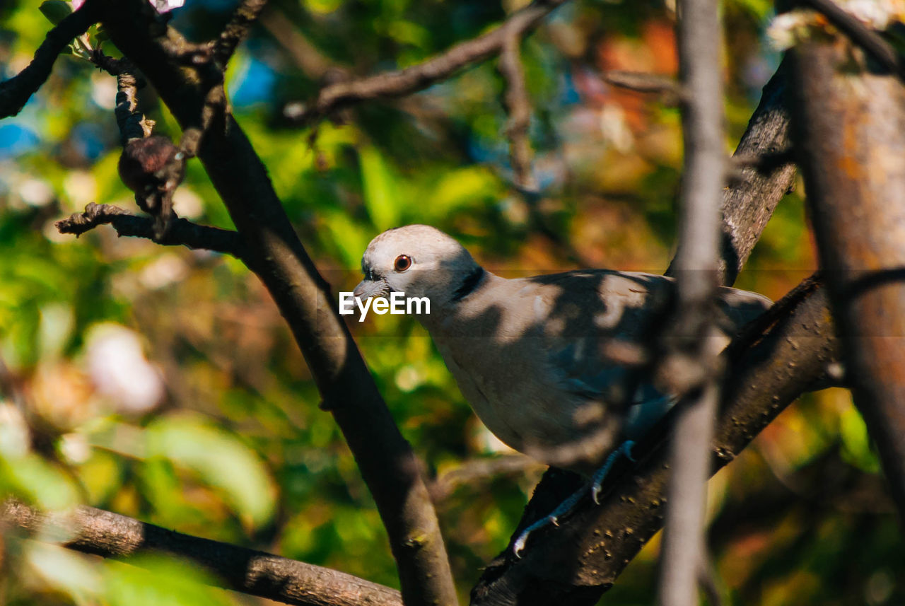 animal themes, animal, animal wildlife, bird, vertebrate, animals in the wild, one animal, branch, tree, perching, plant, nature, day, no people, selective focus, focus on foreground, parrot, outdoors, close-up, beauty in nature