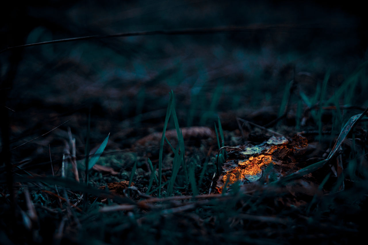land, nature, selective focus, plant, field, no people, forest, close-up, tree, grass, tranquility, outdoors, day, burning, plant part, growth, fire, fire - natural phenomenon, leaf, bonfire, surface level