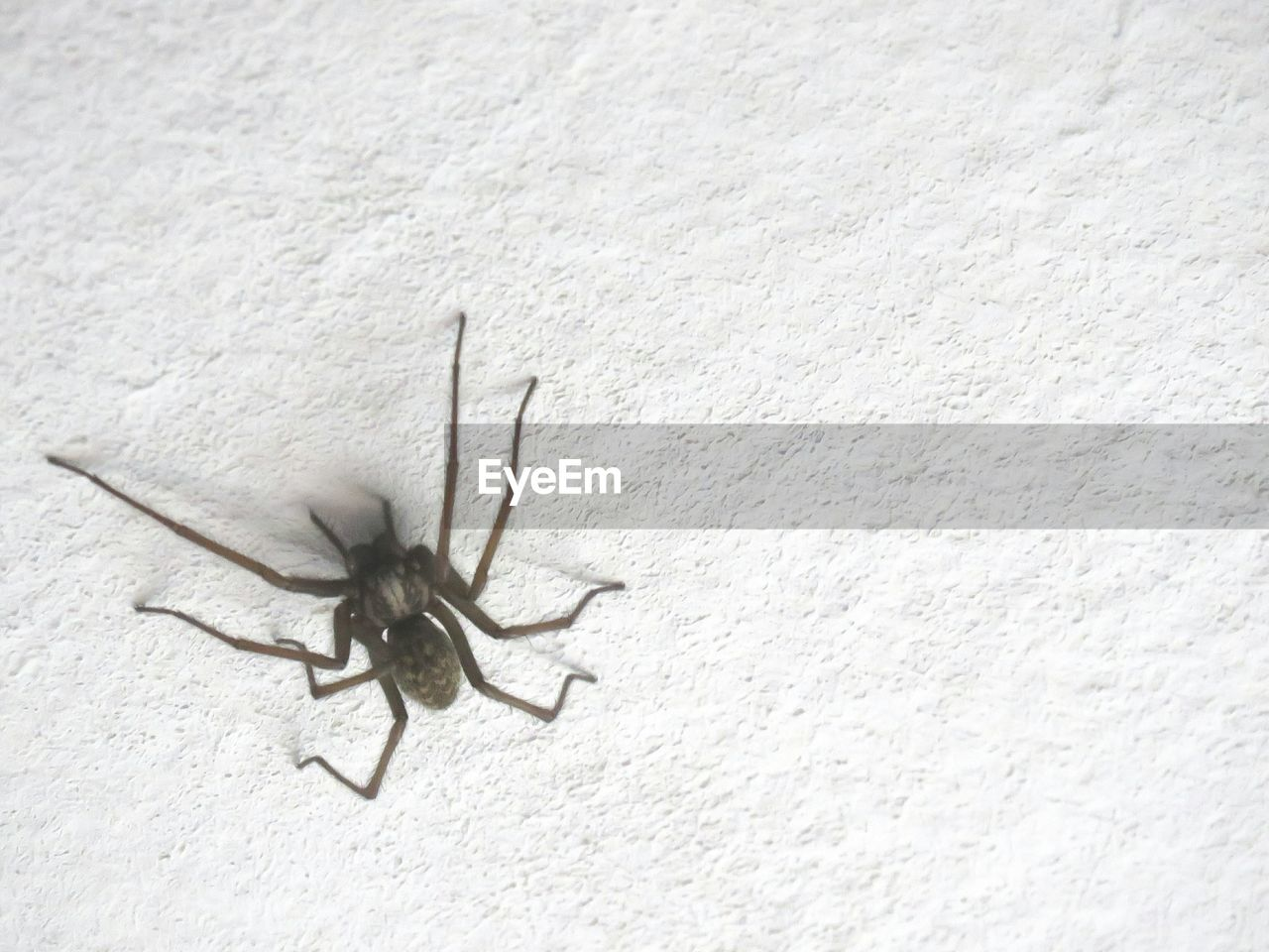 animals in the wild, animal themes, one animal, animal wildlife, spider, insect, no people, day, close-up, outdoors