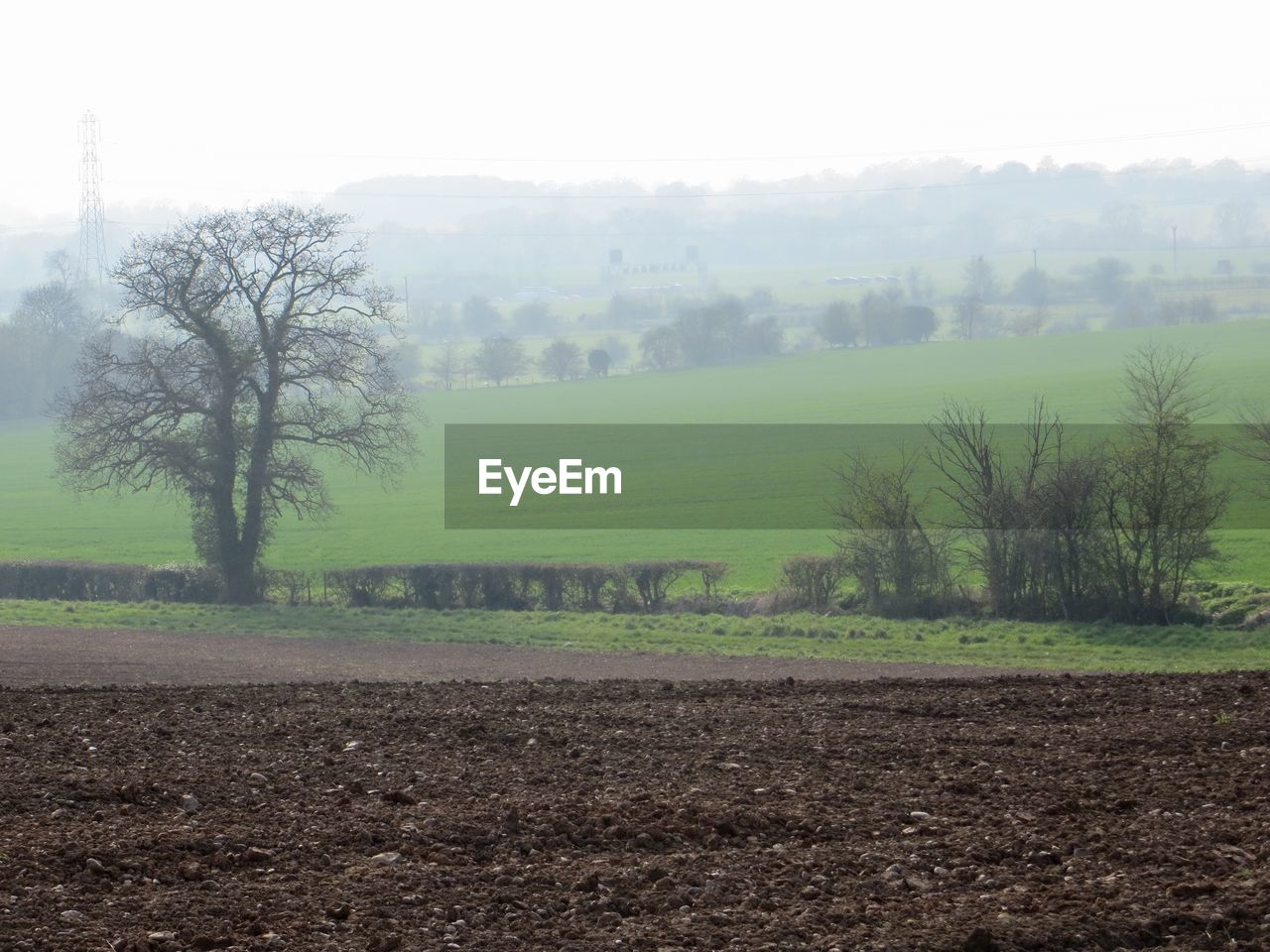 agriculture, tree, field, tranquility, landscape, nature, tranquil scene, farm, scenics, beauty in nature, fog, rural scene, no people, day, plowed field, plough, outdoors, growth, grass, sky