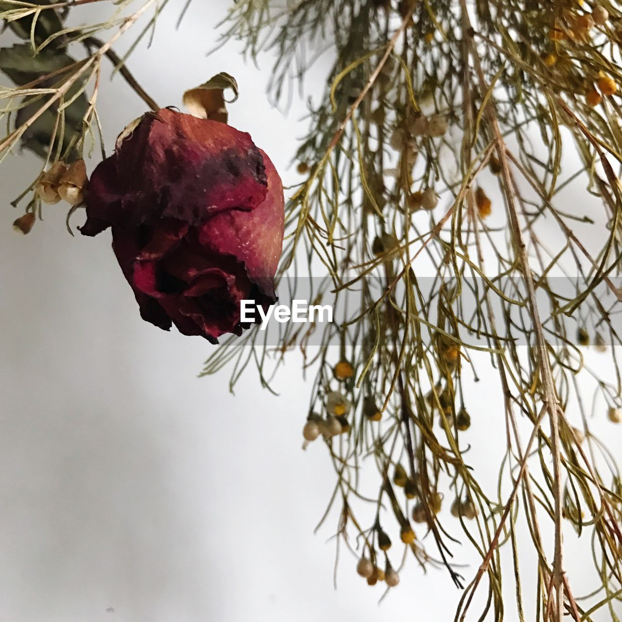 fruit, tree, food and drink, red, nature, low angle view, growth, freshness, beauty in nature, no people, healthy eating, food, branch, day, outdoors, close-up, flower, sky
