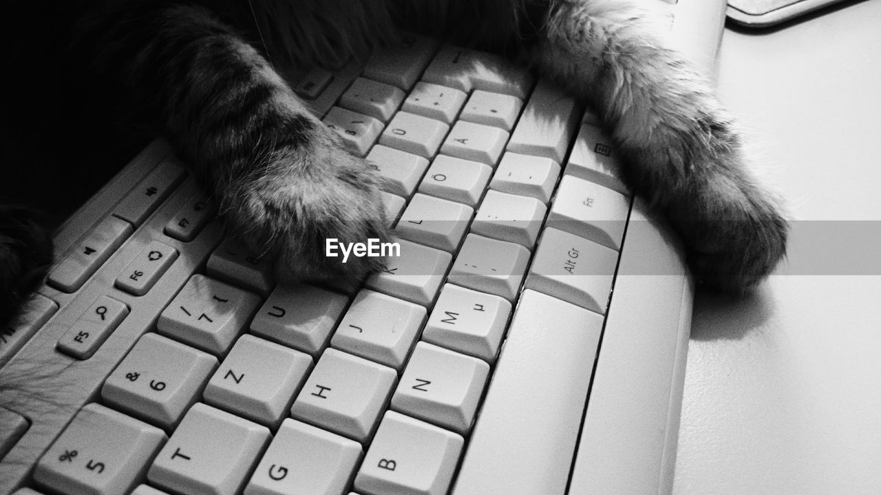 Cropped Image Of Cat On Computer Keyboard