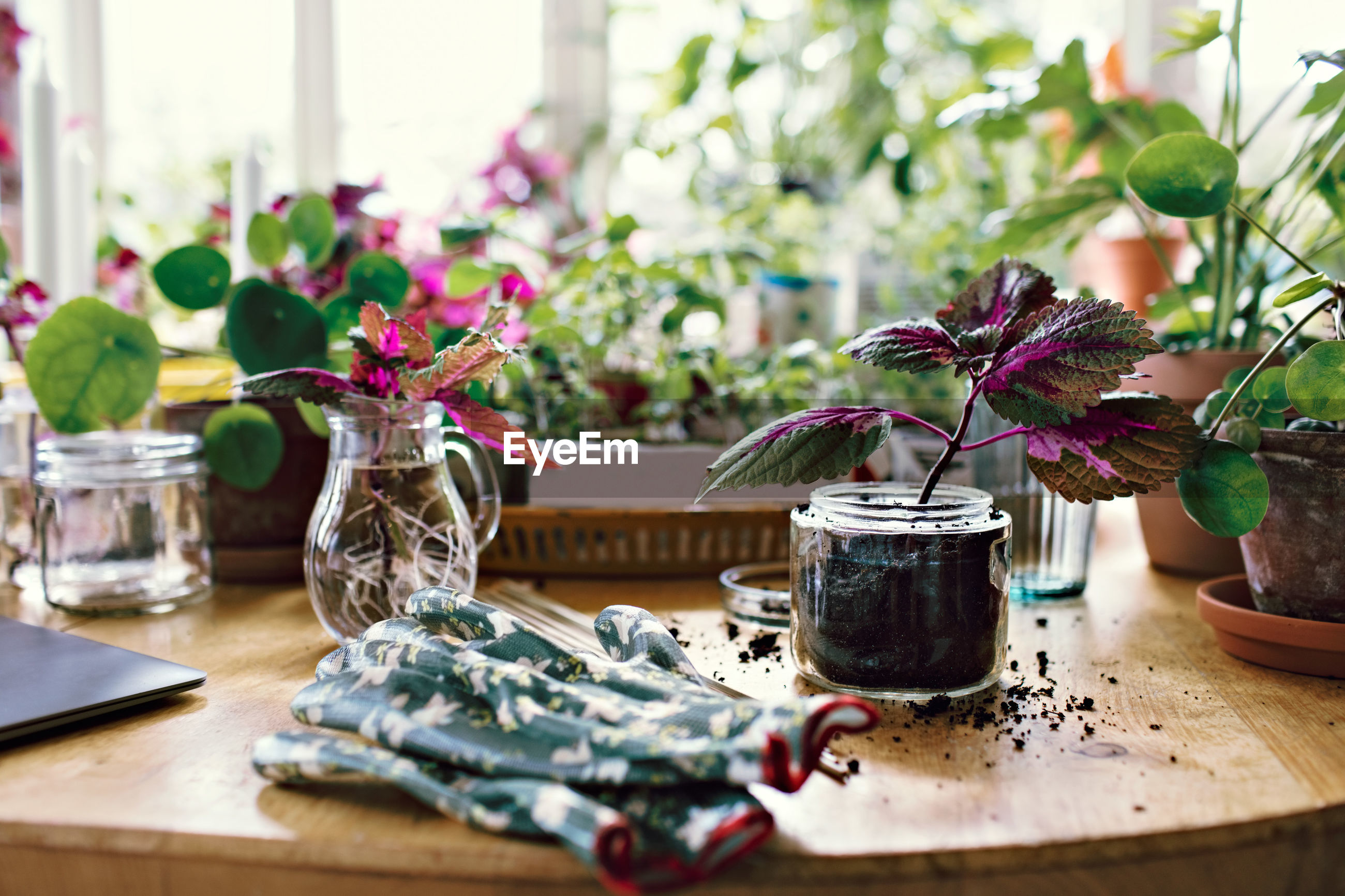 CLOSE-UP OF POTTED PLANTS IN VASE ON TABLE