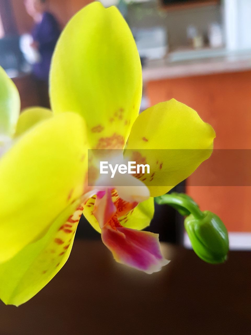 growth, close-up, freshness, yellow, flower, fragility, beauty in nature, nature, green color, no people, day, indoors, flower head