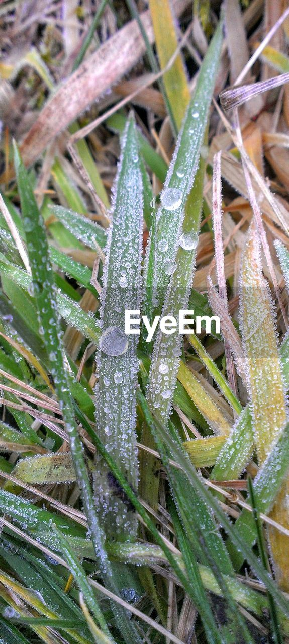 nature, drop, wet, growth, plant, cold temperature, day, green color, frozen, beauty in nature, outdoors, leaf, no people, close-up, water, field, grass, winter, freshness, fragility