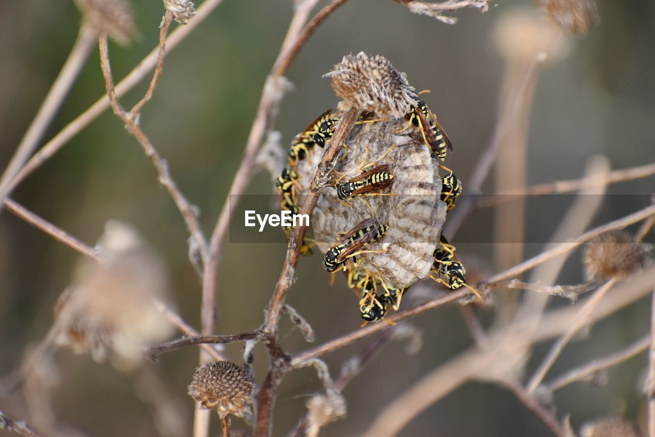 animal wildlife, animals in the wild, animal, animal themes, one animal, close-up, no people, selective focus, nature, day, focus on foreground, plant, insect, vertebrate, reptile, invertebrate, outdoors, animal body part, sunlight, branch, animal head