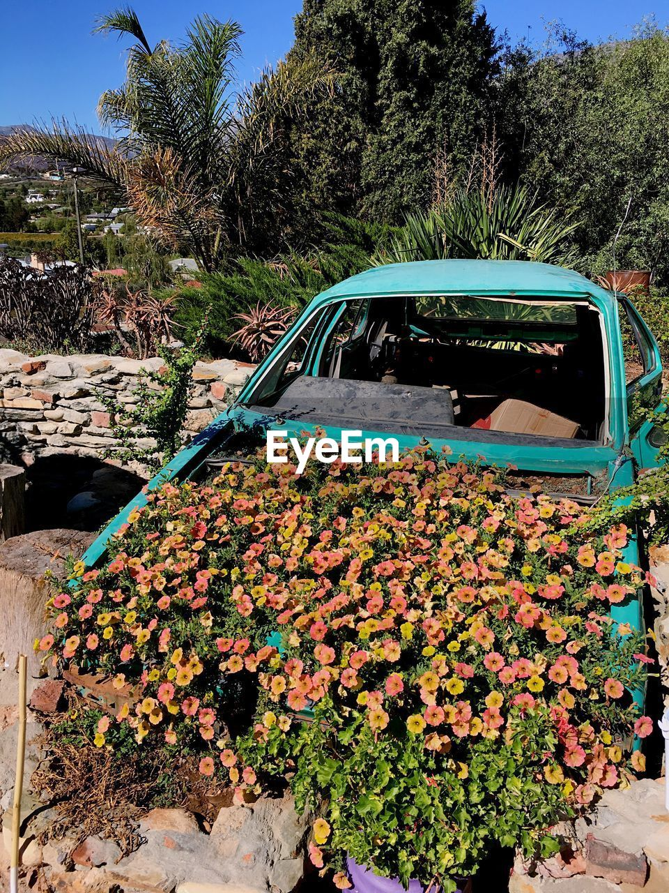 plant, mode of transportation, transportation, nature, car, day, tree, motor vehicle, flower, flowering plant, growth, land vehicle, no people, outdoors, beauty in nature, sunlight, architecture, green color, sky, leaf