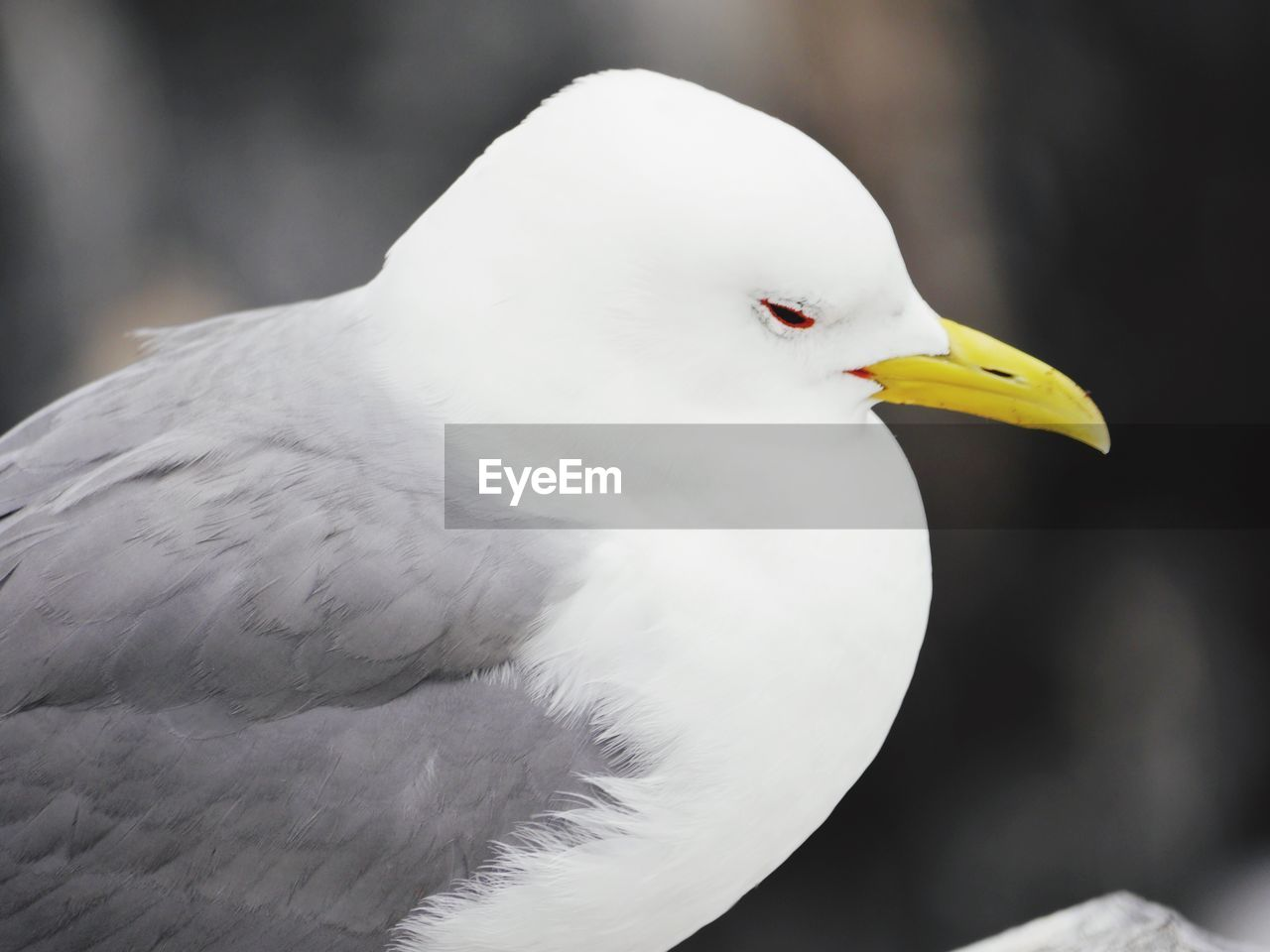 bird, vertebrate, animal themes, animal, animals in the wild, animal wildlife, white color, focus on foreground, one animal, close-up, day, no people, beak, perching, side view, nature, outdoors, beauty in nature, yellow, sea bird, seagull, animal eye
