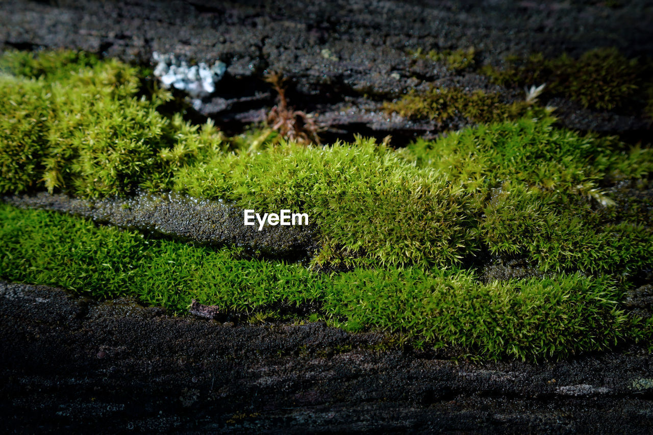 plant, green color, water, growth, nature, beauty in nature, no people, tranquility, day, high angle view, outdoors, tranquil scene, land, lake, grass, scenics - nature, tree, footpath, moss, hedge