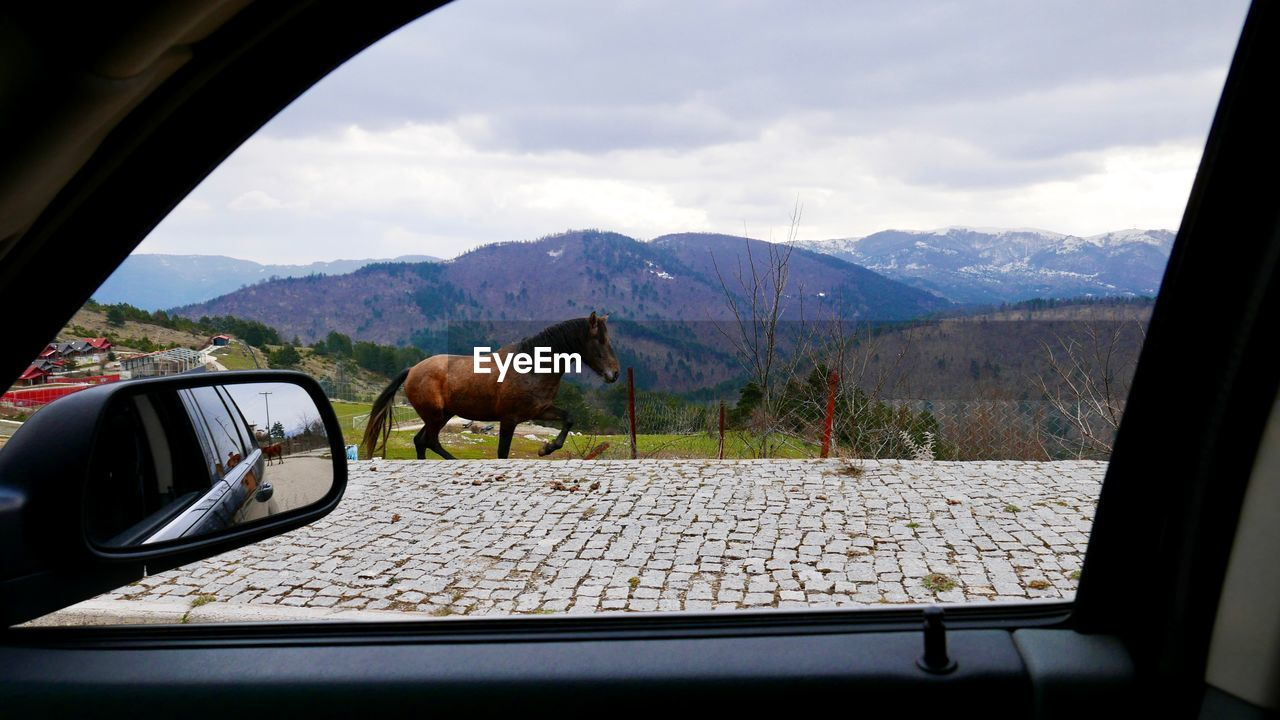 one animal, animal themes, transportation, domestic animals, mammal, vehicle interior, car, land vehicle, mode of transport, day, mountain, window, side-view mirror, dog, no people, sky, car interior, nature, road, animals in the wild, pets, landscape, mountain range, outdoors, tree