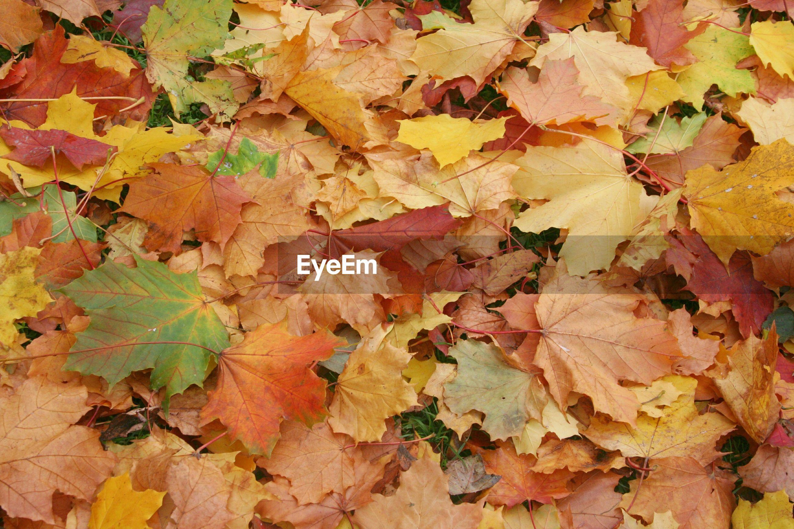 Full frame shot autumn leaves on field
