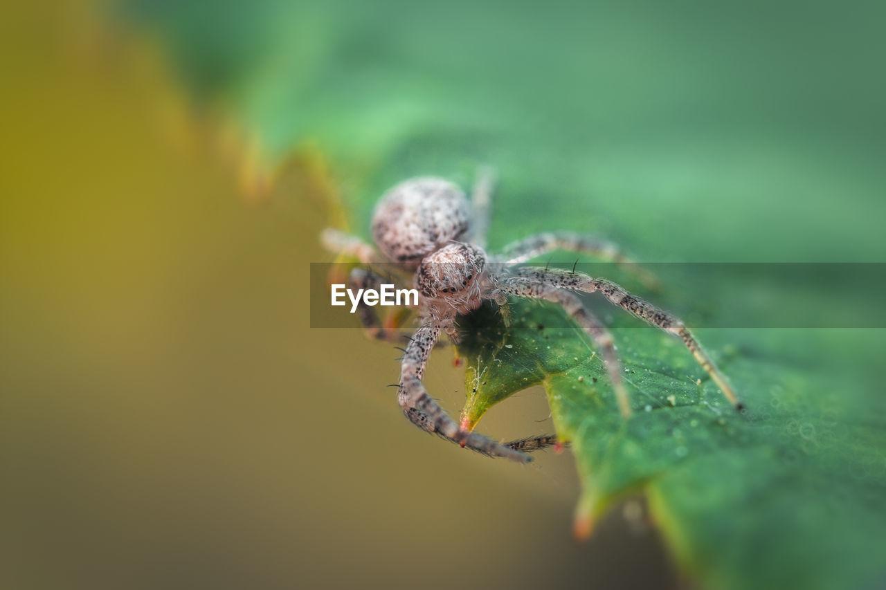 Extreme Close-Up Of Spider On Leaf