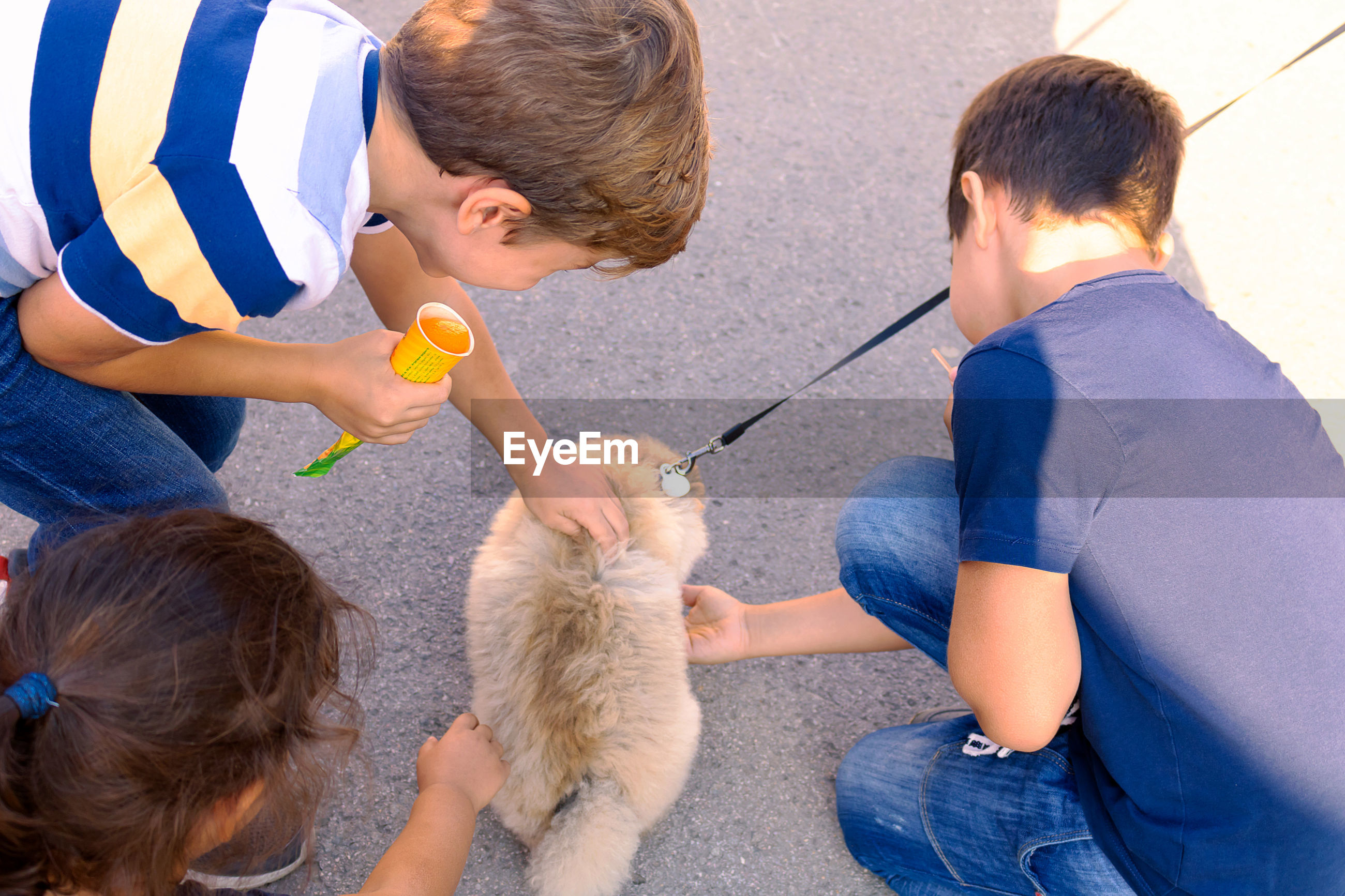 High angle view of kids touching puppy on road