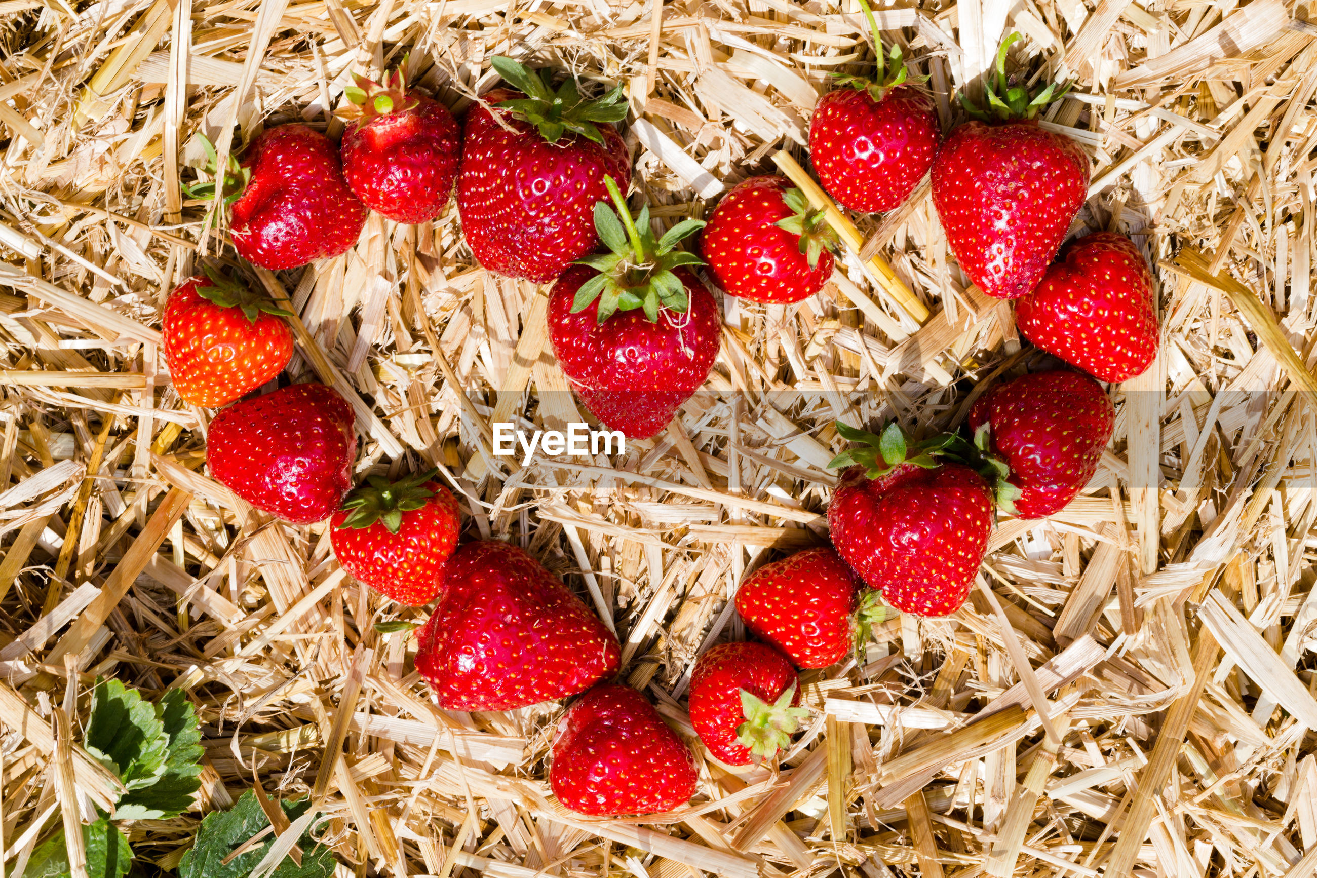 Directly above shot of strawberries