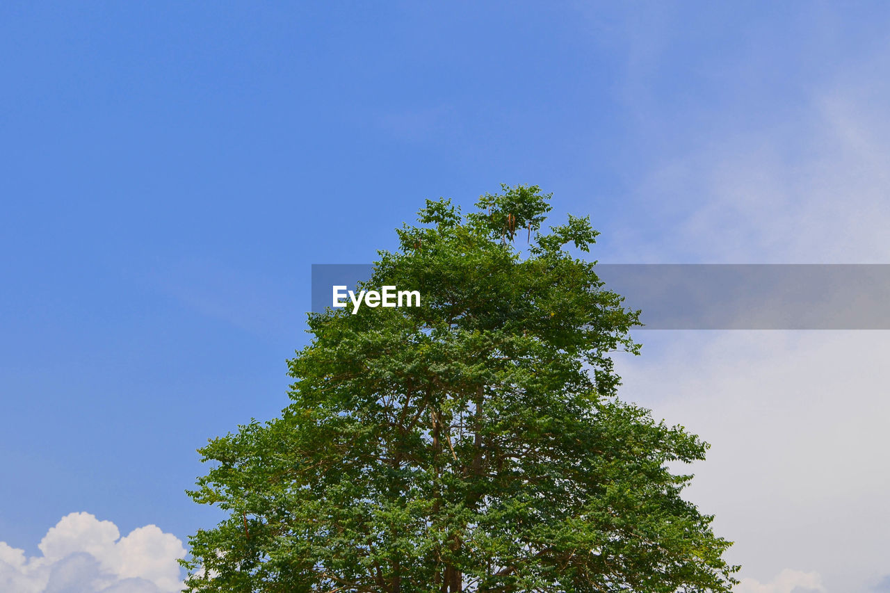sky, tree, plant, low angle view, growth, no people, green color, day, beauty in nature, nature, tranquility, blue, outdoors, copy space, scenics - nature, sunlight, cloud - sky, branch, tranquil scene, treetop, tree canopy