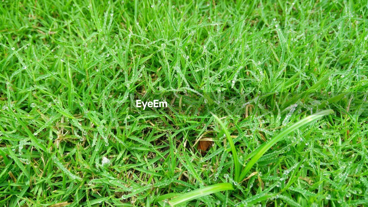 grass, green color, field, full frame, backgrounds, nature, no people, growth, day, outdoors, close-up, freshness