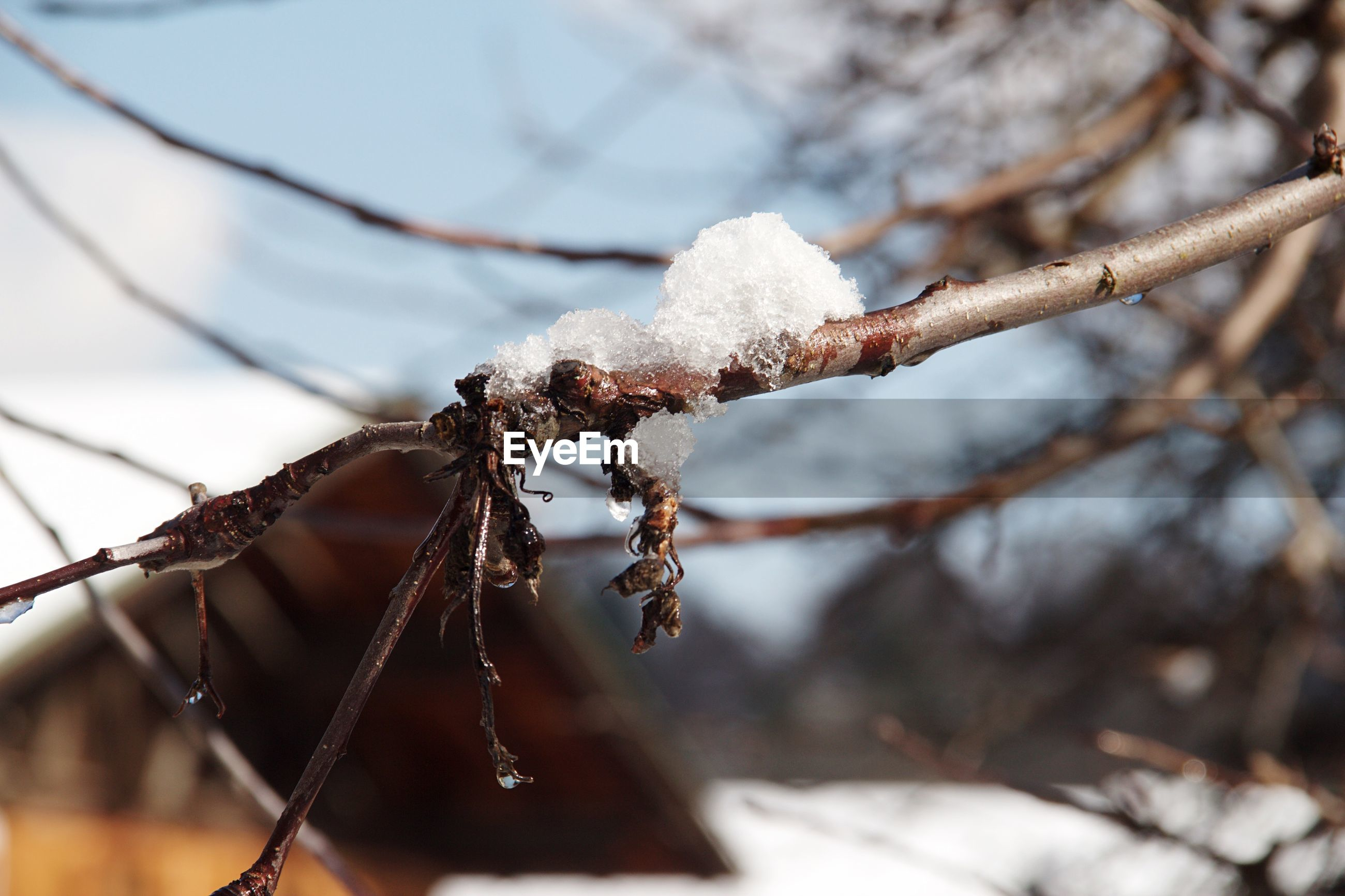 CLOSE-UP OF FROZEN PLANT ON TREE