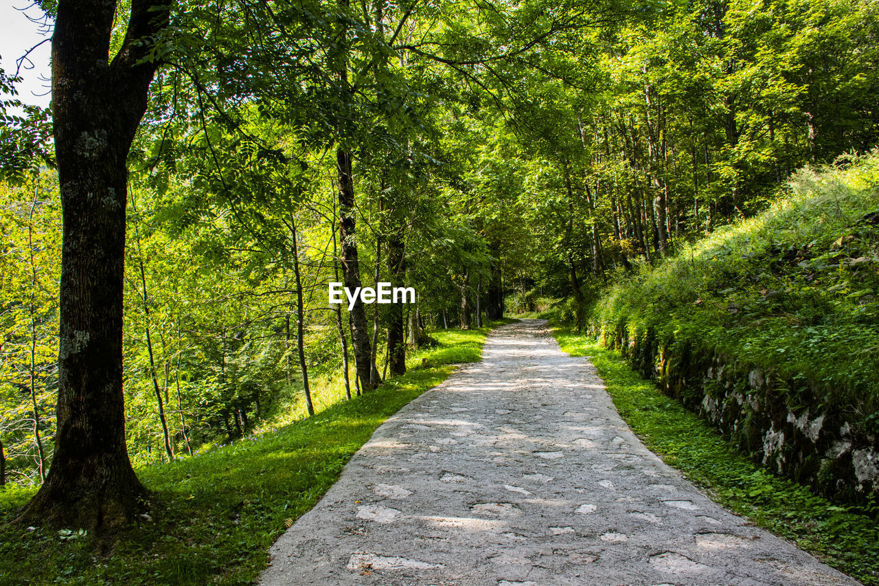 tree, plant, direction, the way forward, green color, forest, beauty in nature, footpath, growth, land, nature, tranquility, tranquil scene, no people, tree trunk, day, trunk, non-urban scene, park, diminishing perspective, outdoors, woodland, treelined, tree canopy