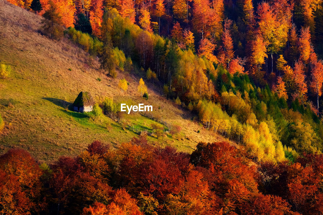 Trees growing on hill during autumn