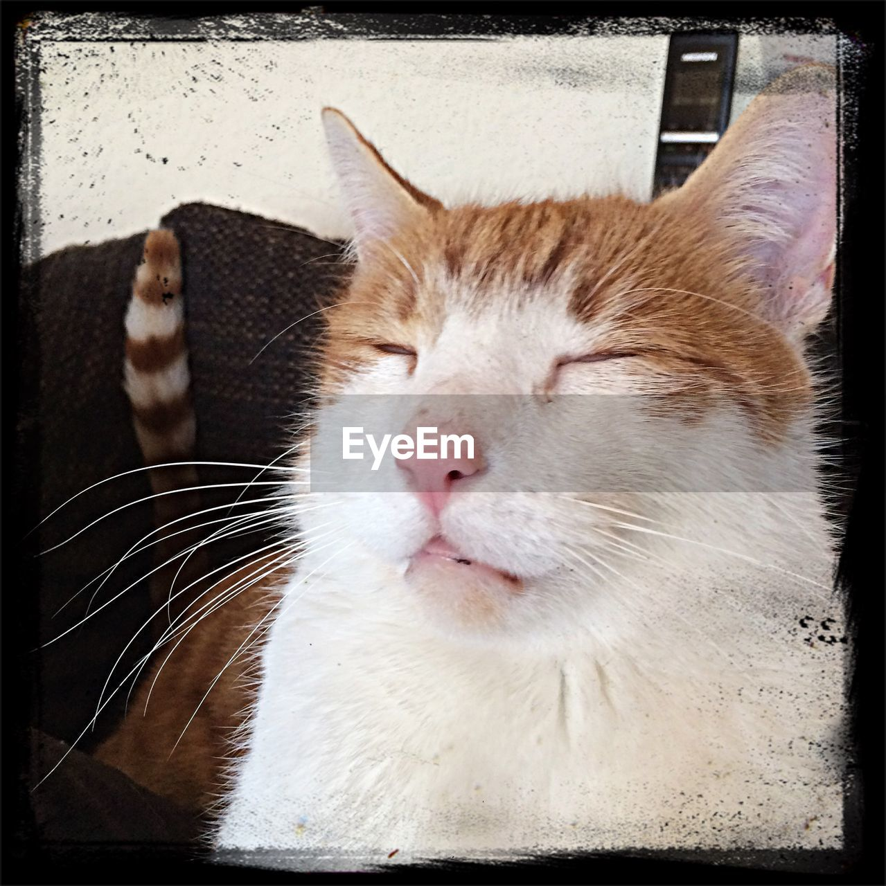 domestic cat, pets, one animal, animal themes, domestic animals, whisker, indoors, mammal, feline, close-up, no people, day