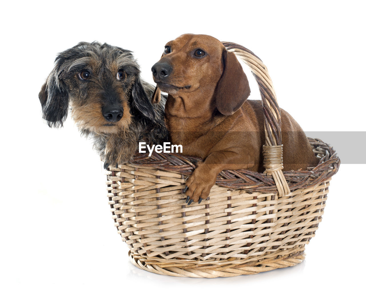 Close-Up Of Dogs In Wicker Basket Against White Background
