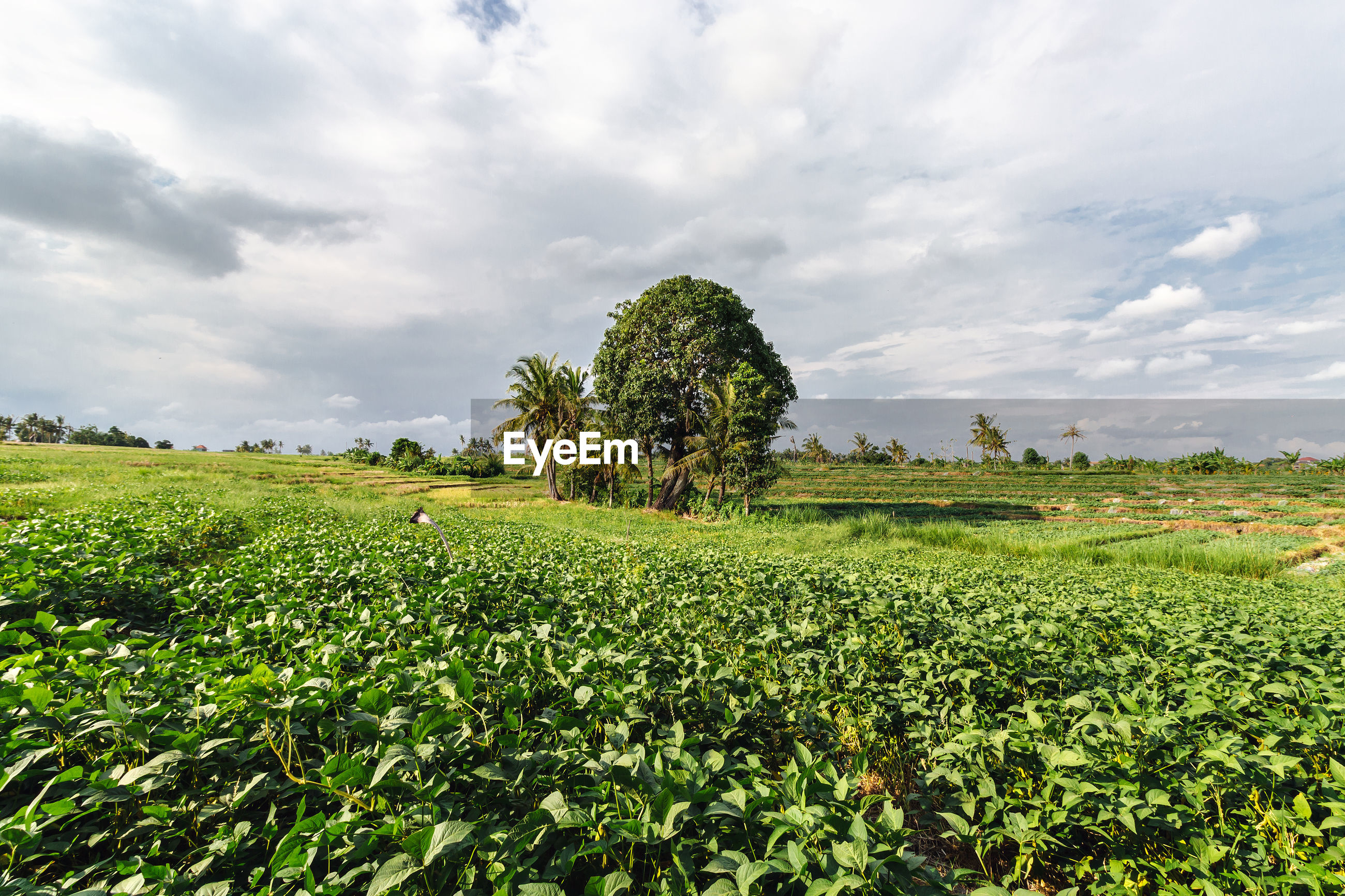 SCENIC VIEW OF FARM AGAINST SKY