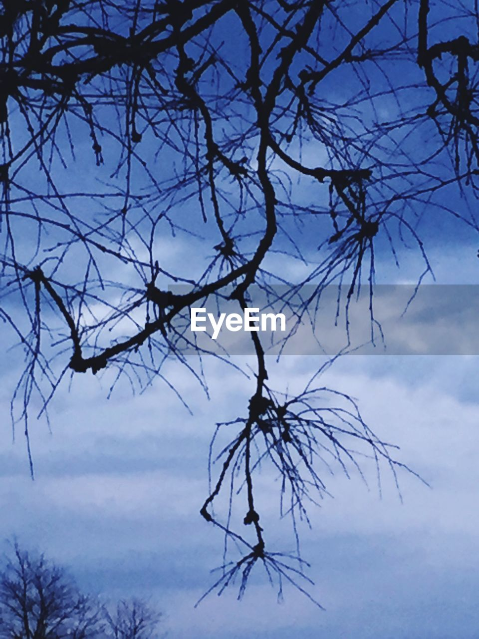 sky, tree, nature, beauty in nature, branch, low angle view, tranquility, bare tree, tranquil scene, no people, outdoors, silhouette, scenics, cloud - sky, day
