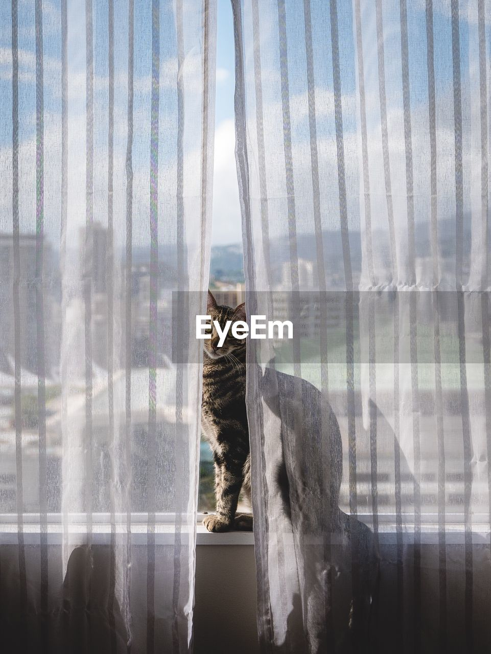 Portrait of cat sitting on window sill seen through curtains
