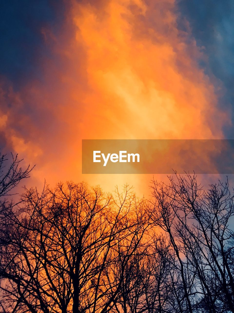 orange color, tree, low angle view, beauty in nature, nature, sunset, bare tree, tranquility, tranquil scene, outdoors, sky, silhouette, no people, scenics, branch, cloud - sky, autumn, day