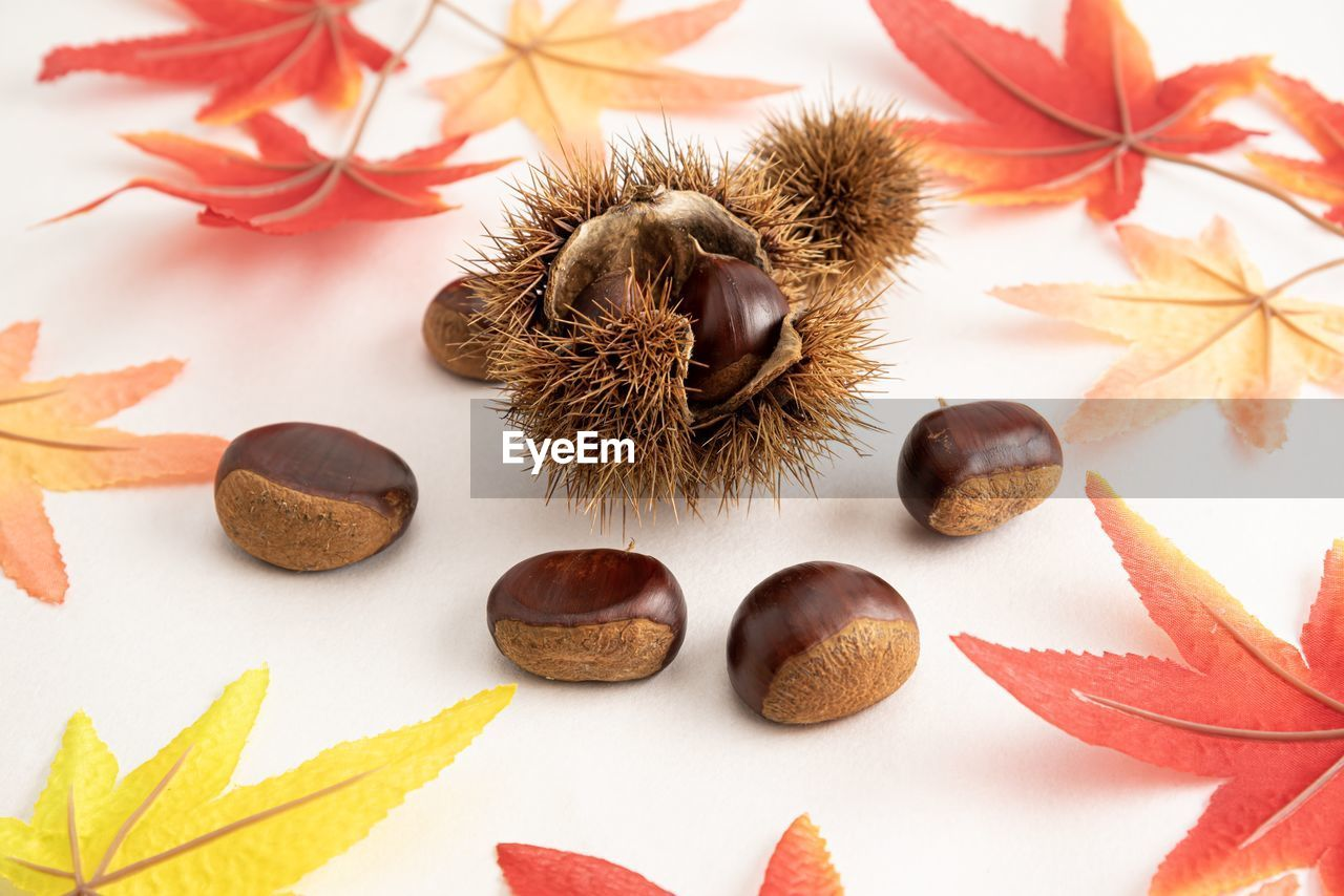 food, leaf, no people, close-up, food and drink, plant part, nut - food, nut, healthy eating, still life, indoors, freshness, chestnut - food, wellbeing, table, high angle view, fruit, brown, spice, nature, leaves