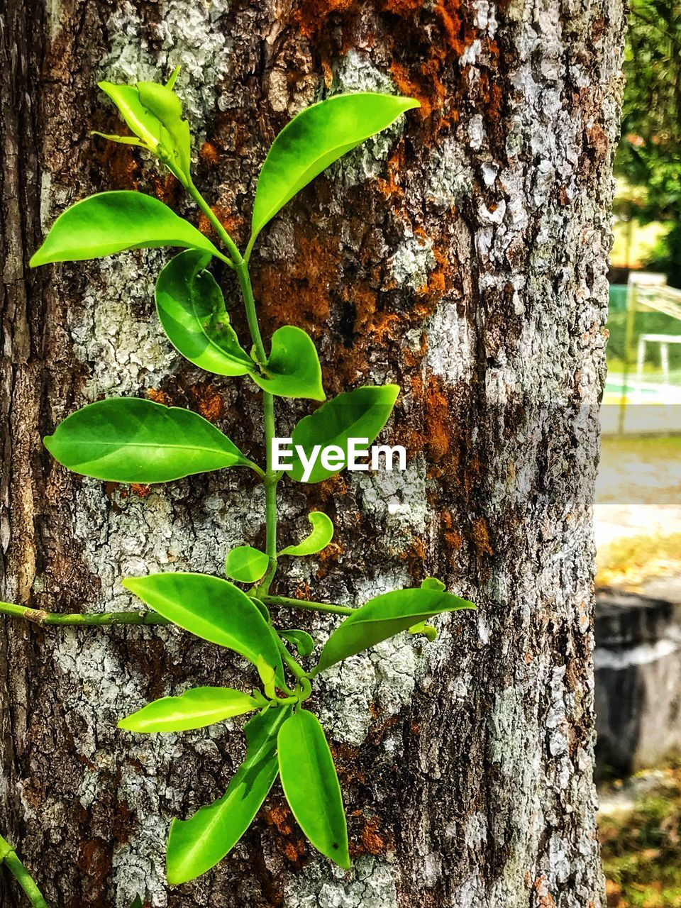 growth, tree trunk, plant, nature, green color, day, leaf, tree, close-up, outdoors, no people, bark, beauty in nature, fragility, freshness