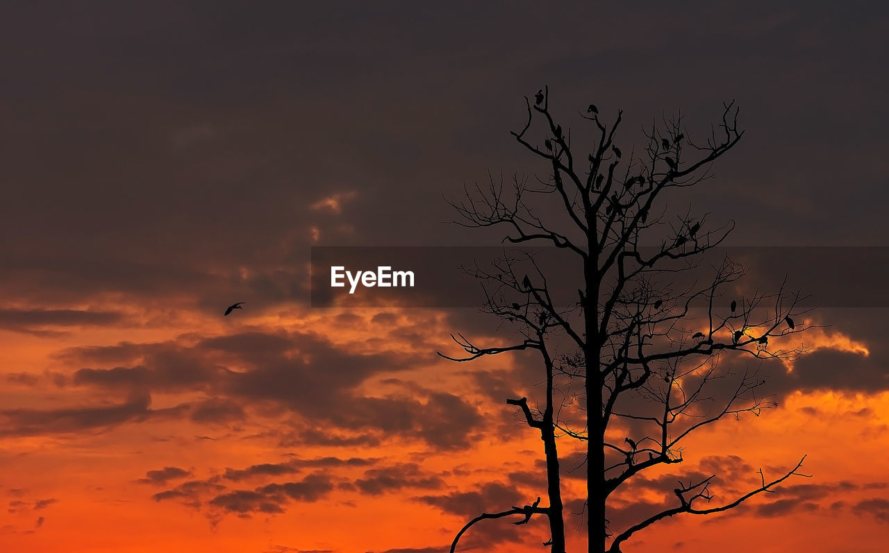 sky, cloud - sky, bare tree, sunset, silhouette, tree, beauty in nature, orange color, branch, tranquility, plant, bird, scenics - nature, no people, tranquil scene, vertebrate, nature, low angle view, animal themes, animals in the wild, outdoors, dead plant