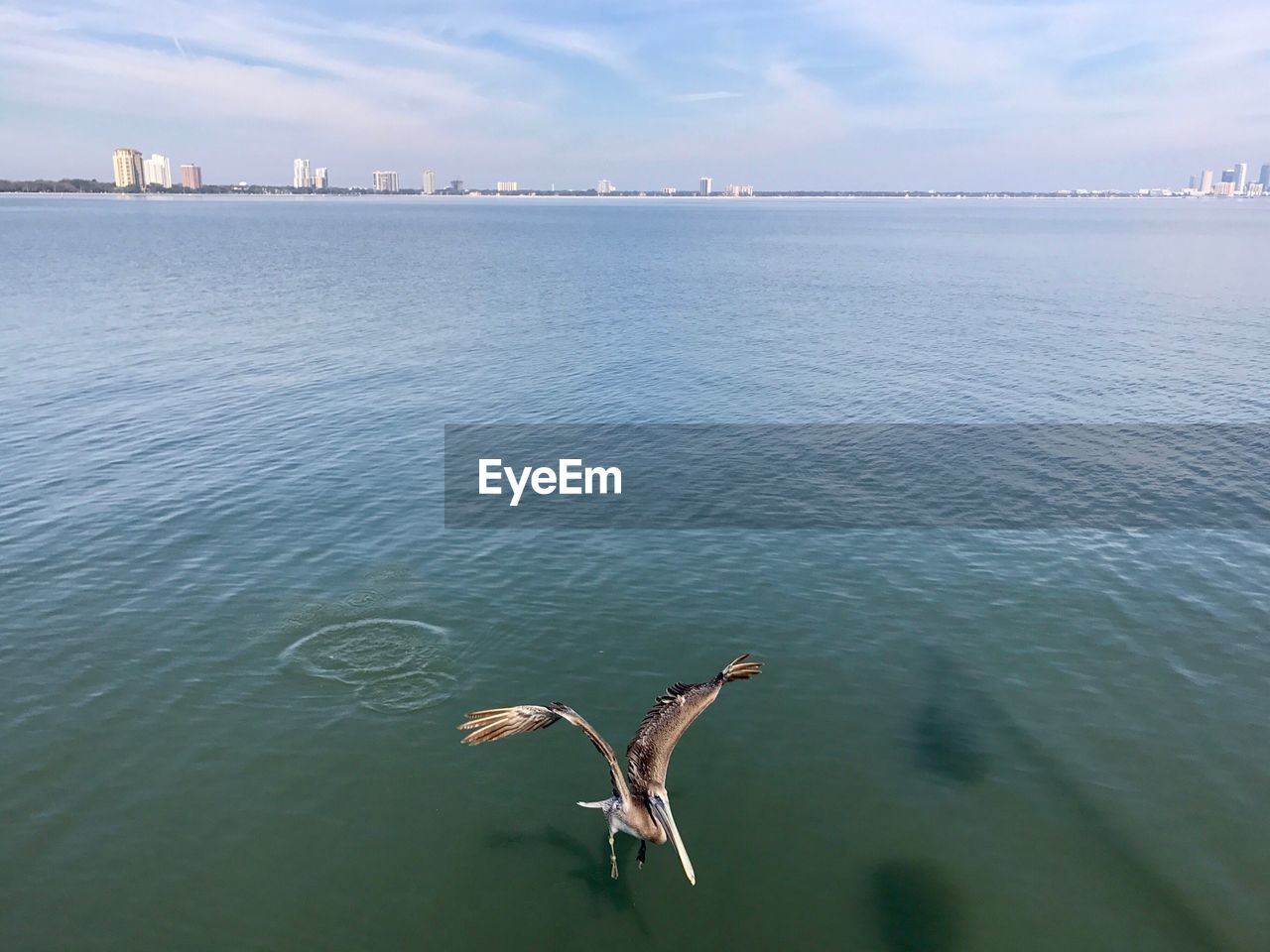 water, animal themes, day, spread wings, flying, animals in the wild, one animal, waterfront, nature, mid-air, no people, outdoors, architecture, sky, bird, mammal