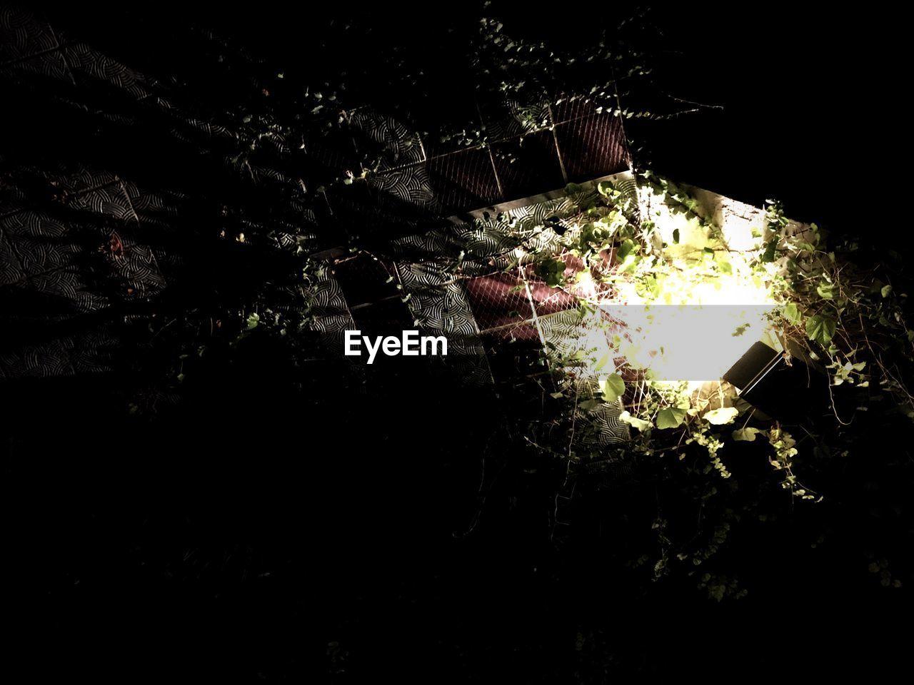 night, no people, outdoors, illuminated, close-up, nature
