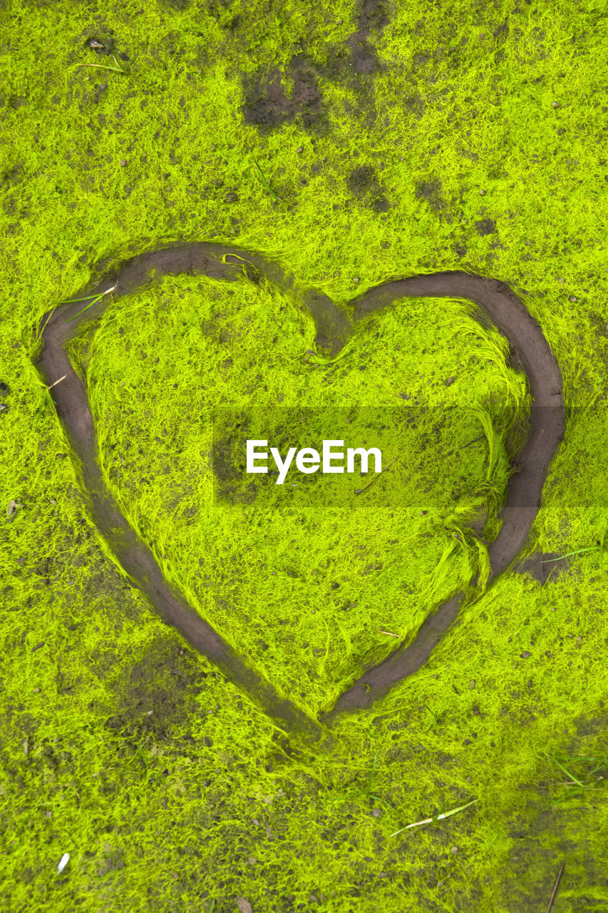 HIGH ANGLE VIEW OF HEART SHAPE MADE OF GREEN PLANTS