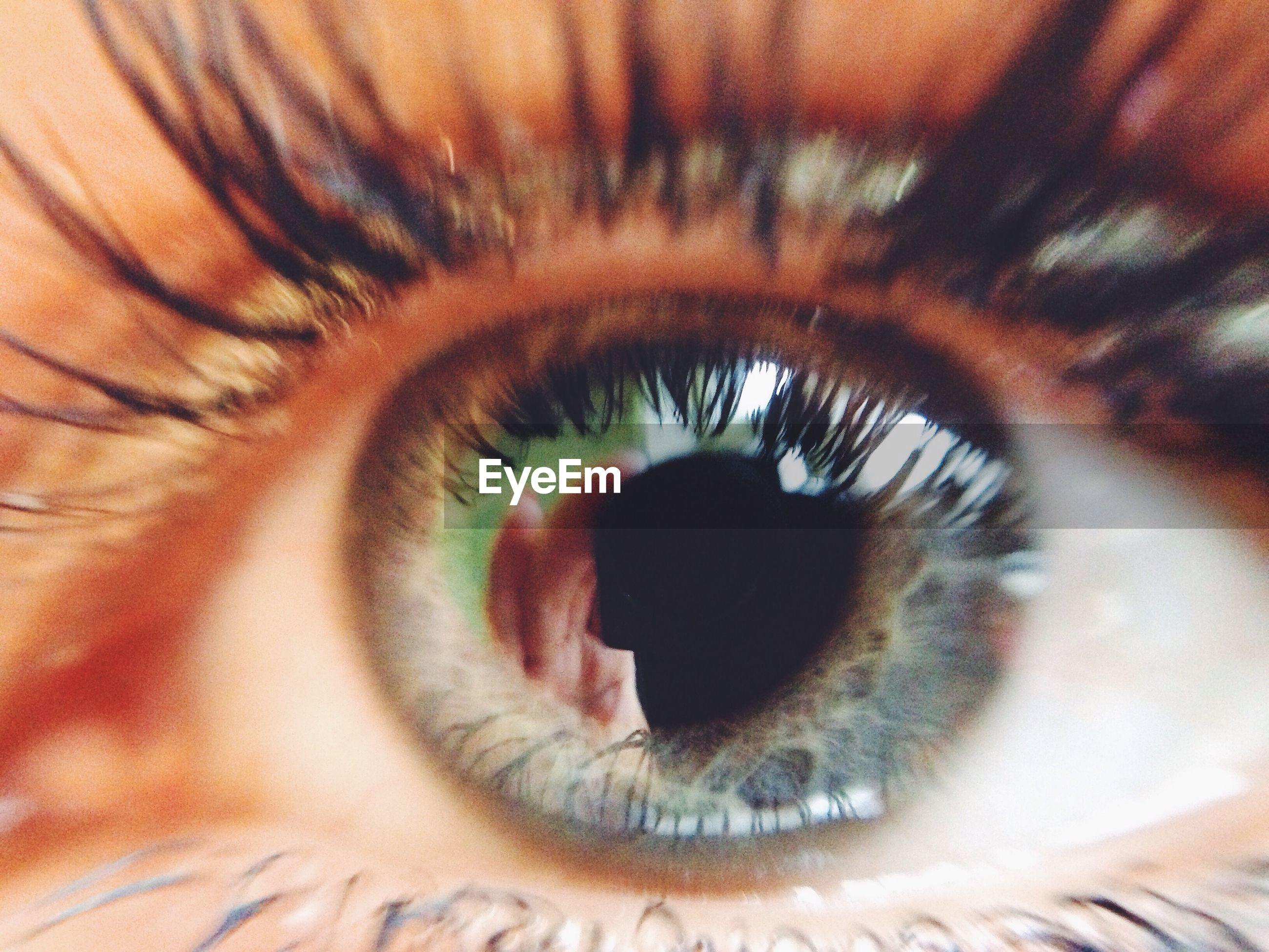 eyelash, human eye, close-up, extreme close-up, full frame, eyesight, sensory perception, backgrounds, extreme close up, iris - eye, part of, eyeball, detail, indoors, macro, human skin, selective focus