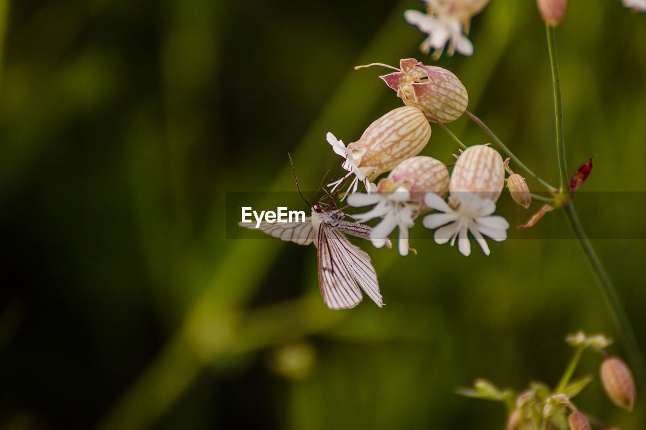 flower, flowering plant, plant, beauty in nature, fragility, vulnerability, growth, close-up, freshness, petal, flower head, selective focus, no people, focus on foreground, nature, day, inflorescence, invertebrate, insect, animal themes, outdoors, pollen, pollination, butterfly - insect