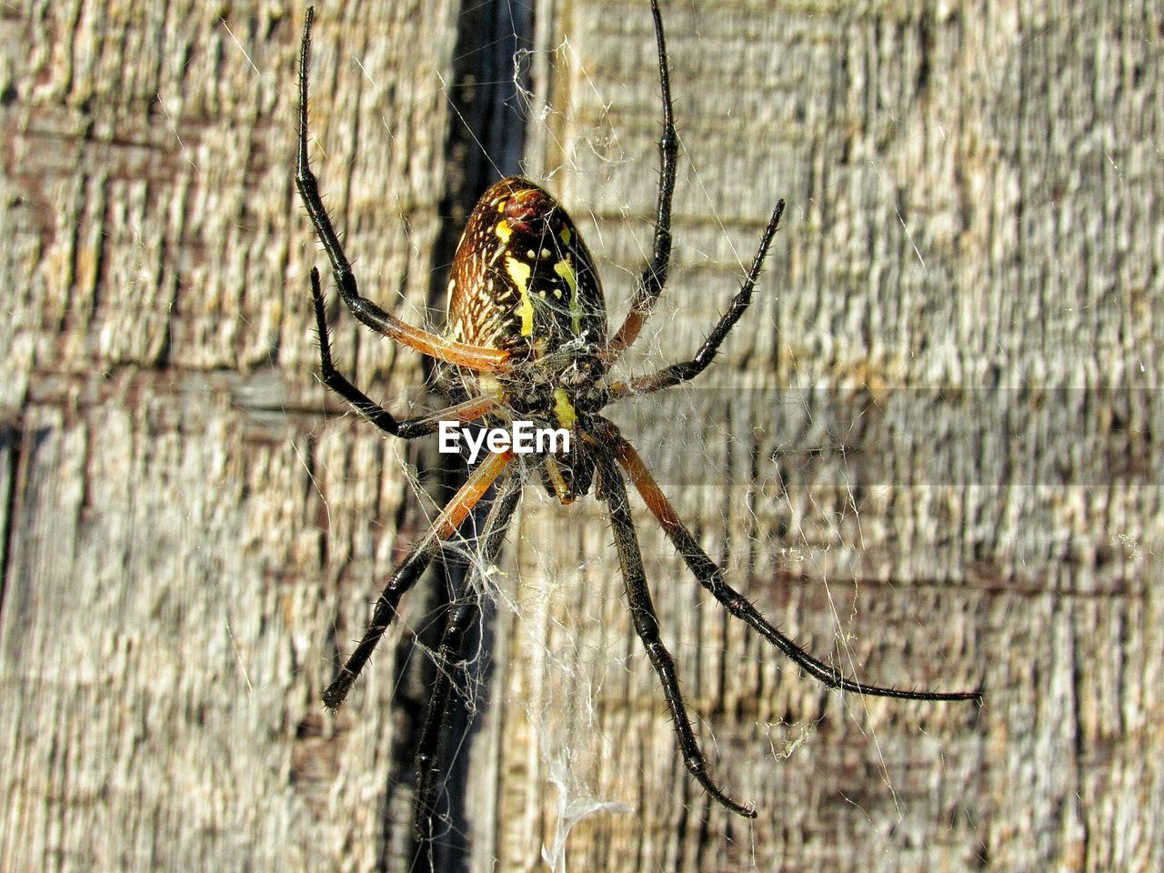 invertebrate, animals in the wild, insect, animal themes, animal wildlife, one animal, animal, close-up, day, arthropod, arachnid, no people, spider, outdoors, focus on foreground, nature, animal body part, zoology, tree, plant