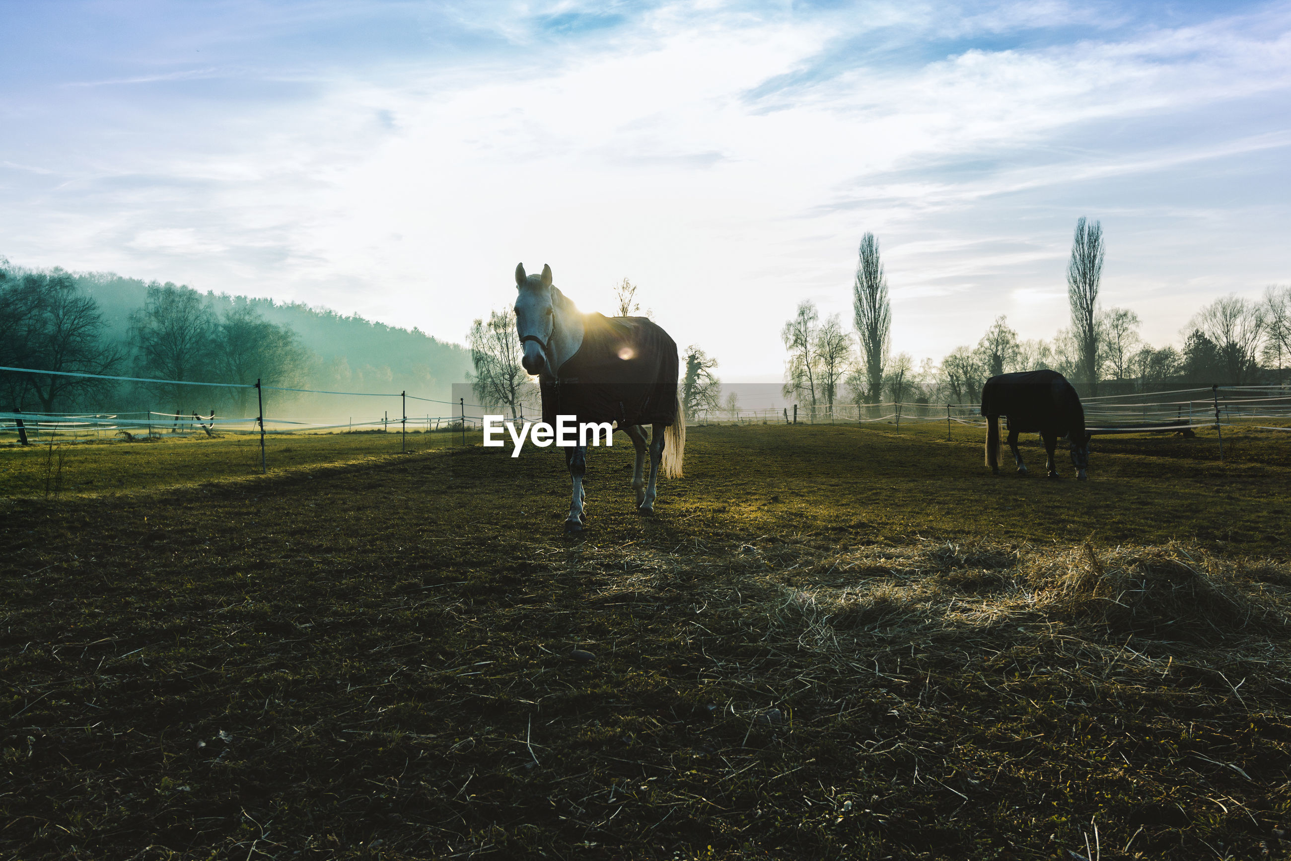 Horse on field against sky
