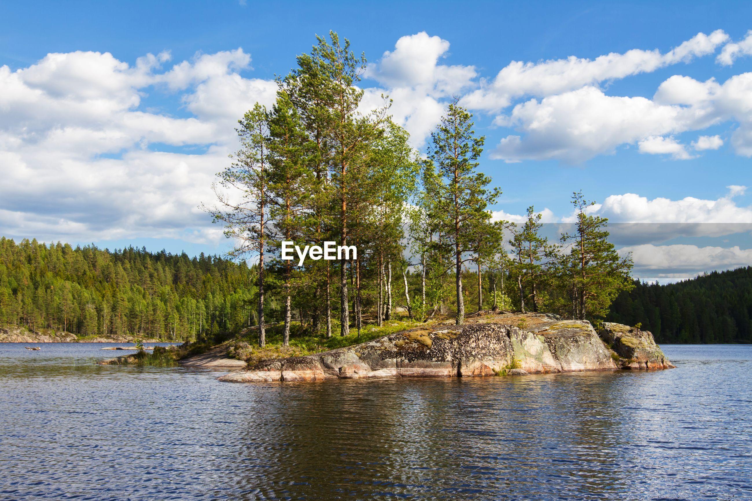 Trees on rock formation in stora gla at glaskogens naturreservat