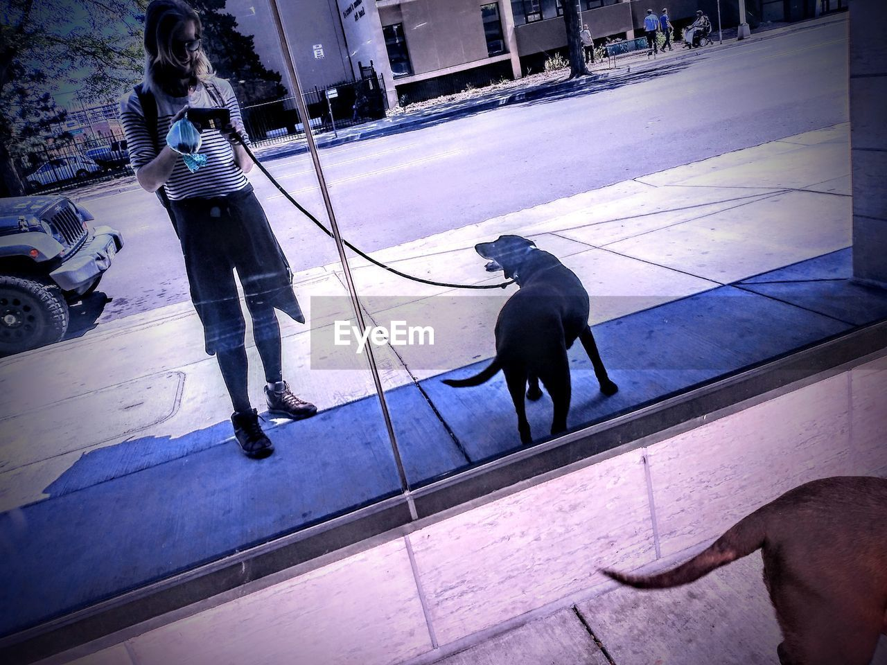 Reflection Of Woman Photographing While Standing With Dog On Window