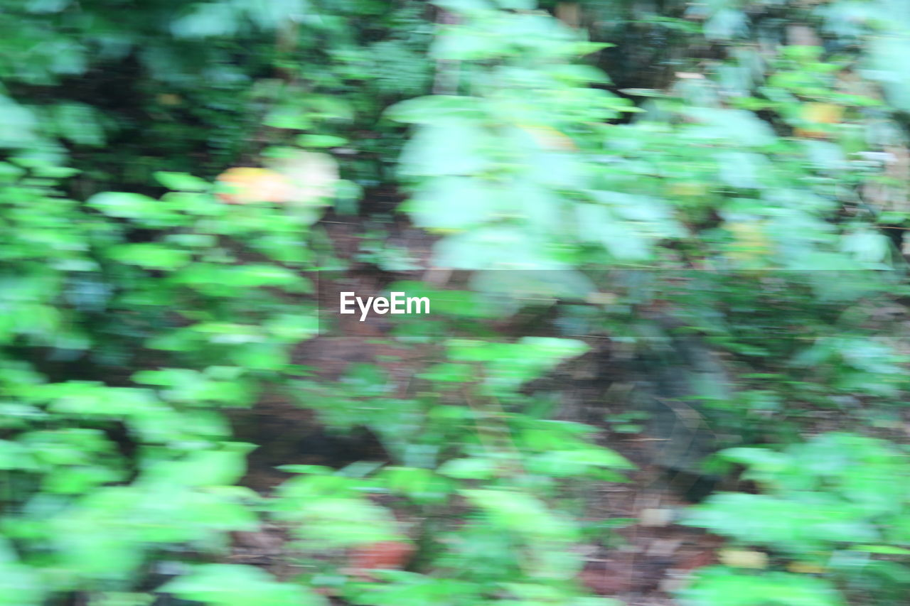 blurred motion, green color, forest, tree, plant, no people, land, day, growth, nature, motion, defocused, full frame, backgrounds, beauty in nature, selective focus, outdoors, tranquility, sunlight, woodland