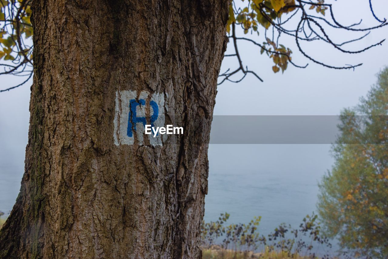 tree, tree trunk, nature, day, no people, blue, outdoors, branch, beauty in nature, sky