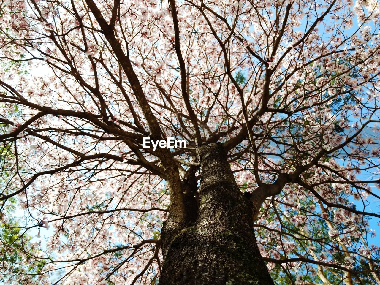 tree, branch, low angle view, nature, tree trunk, outdoors, day, growth, bare tree, no people, beauty in nature, sky, forest