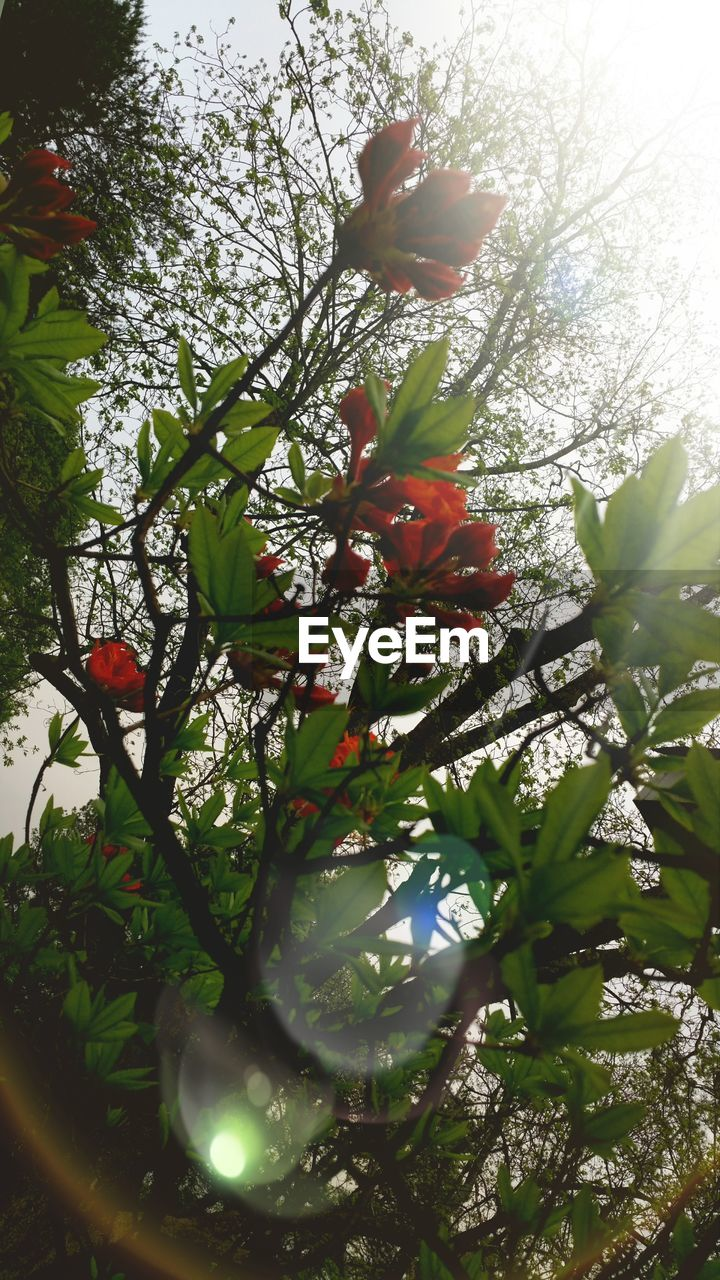 growth, flower, beauty in nature, nature, tree, petal, no people, fragility, freshness, day, plant, outdoors, close-up, branch, flower head