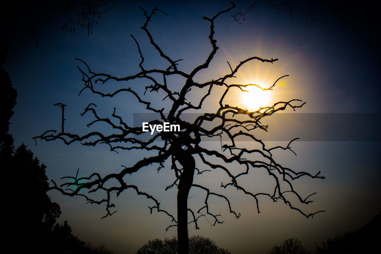 tree, silhouette, beauty in nature, nature, sunset, scenics, no people, tranquility, sky, outdoors, tranquil scene, branch, bare tree, day