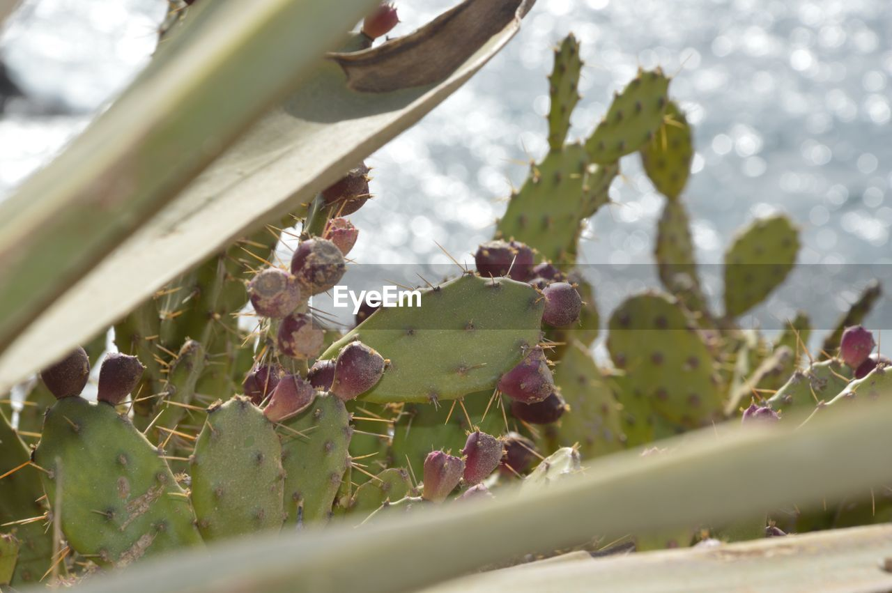 plant, growth, nature, beauty in nature, no people, day, close-up, selective focus, thorn, succulent plant, green color, cactus, plant part, leaf, flower, flowering plant, bud, outdoors, spiked, freshness