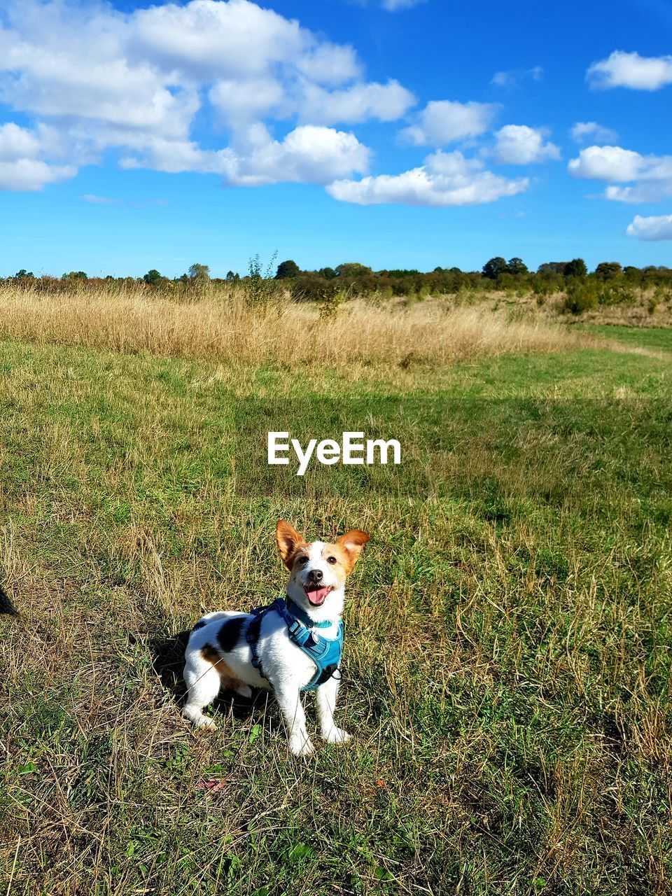 pets, domestic animals, domestic, one animal, canine, dog, mammal, field, land, animal themes, grass, animal, plant, landscape, vertebrate, nature, environment, sky, cloud - sky, day, no people, outdoors, purebred dog